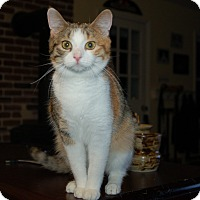 Adopt A Pet :: Gracie - Great Mills, MD
