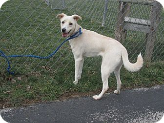 Feist Mix Dog for adoption in Germantown, Maryland - Lily Lou