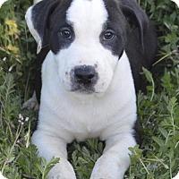 Adopt A Pet :: Crayon: Turquoise - Palo Alto, CA