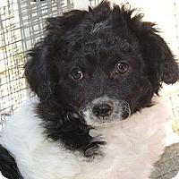 Adopt A Pet :: Grace - La Habra Heights, CA