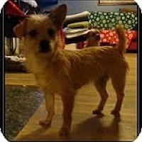 Adopt A Pet :: Trixie and Trina - Staunton, VA