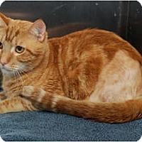 Adopt A Pet :: Captain - Farmingdale, NY
