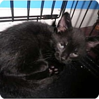 Adopt A Pet :: Pepper - Warren, MI