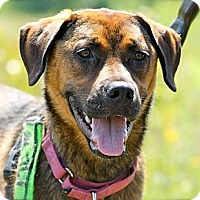 Adopt A Pet :: Fern - Hastings, NY