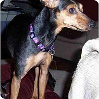 Adopt A Pet :: Nadia - Nashville, TN