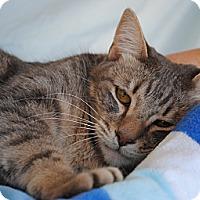 Adopt A Pet :: Lucie - Palmdale, CA