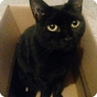 Adopt A Pet :: Staples - Vancouver, BC