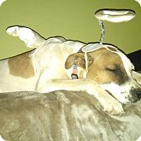 Adopt A Pet :: Chaz - Shelter Island, NY