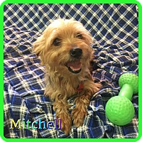 Adopt A Pet :: Mitchell - Hollywood, FL
