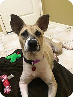 German Shepherd Dog Mix Dog for adoption in Austin, Texas - Libby