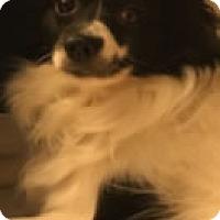 Adopt A Pet :: Tika - Avon, NY