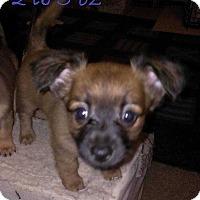 Adopt A Pet :: Zeus - Livermore, CA