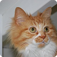 Adopt A Pet :: Teddi - Victor, NY