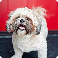Adopt A Pet :: Lotto - Santa Monica, CA