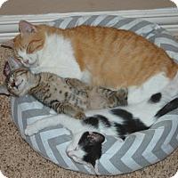 Adopt A Pet :: Peaches - The Colony, TX