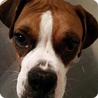 Adopt A Pet :: Harmony - Hesperia, CA