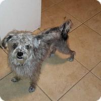 Terrier (Unknown Type, Medium) Mix Dog for adoption in Livermore, California - Lucky