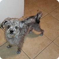 Adopt A Pet :: Lucky - Livermore, CA