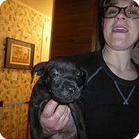 Adopt A Pet :: Geneva - Glastonbury, CT