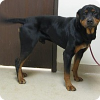 Adopt A Pet :: Bruno - Gary, IN