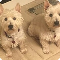 Adopt A Pet :: MANDY AND KRISSY-ADOPTED - Frisco, TX