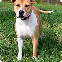 Adopt A Pet :: Chloe 34234890 - Westampton, NJ