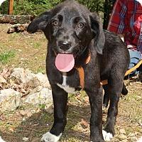 Adopt A Pet :: Peaches - Rockingham, NH