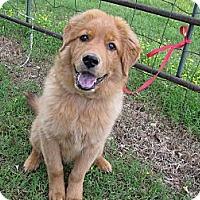 Adopt A Pet :: Qwerty - Humboldt, TN