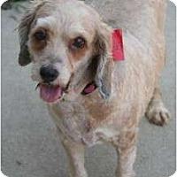 Adopt A Pet :: Sandy - Westfield, IN