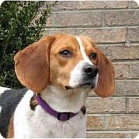 Adopt A Pet :: Peaches - Blairstown, NJ