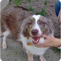Adopt A Pet :: Honey - Orlando, FL