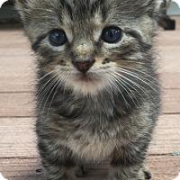 Adopt A Pet :: Champ - Trevose, PA