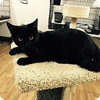 Adopt A Pet :: Jonathan - Speonk, NY