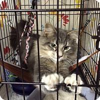 Adopt A Pet :: Ratatouille - Byron Center, MI