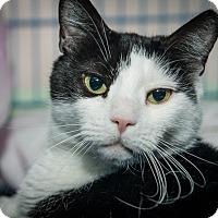 Adopt A Pet :: Martha - New York, NY