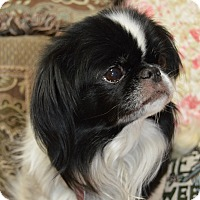 Adopt A Pet :: BeiBei - Aurora, CO
