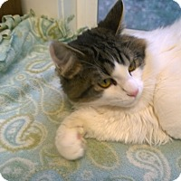 Adopt A Pet :: Bob and Dylan - Seattle c/o Kingston 98346/ Washington State, WA
