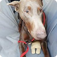 Adopt A Pet :: Callum - PENDING - Richmond, KY
