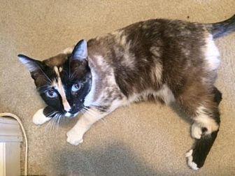 Calico Cat for adoption in Atlanta, Georgia - Effie