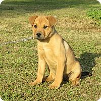 Adopt A Pet :: TERRA - Newburgh, NY