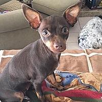 Adopt A Pet :: Kahlua - Los Angeles, CA