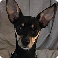 Adopt A Pet :: Kermit - San Leandro, CA