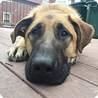 Adopt A Pet :: Chevy - Baltimore, MD