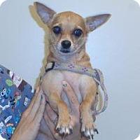Adopt A Pet :: Isebel/Izzy - Wildomar, CA