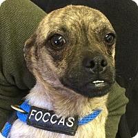 Adopt A Pet :: Smiley - Redding, CA