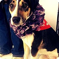 Adopt A Pet :: Trinity - Beaumont, TX