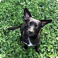 Adopt A Pet :: PICKLES - West Palm Beach, FL