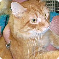 Adopt A Pet :: Pascal - Chesapeake, VA