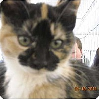 Adopt A Pet :: Artemis - Riverside, RI