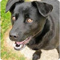 Adopt A Pet :: Shadow - Chesapeake, VA